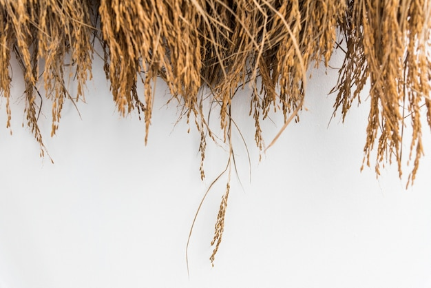 곡물로 말린 건초 또는 짚