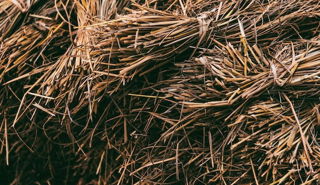 Fieno essiccato o paglia con grani