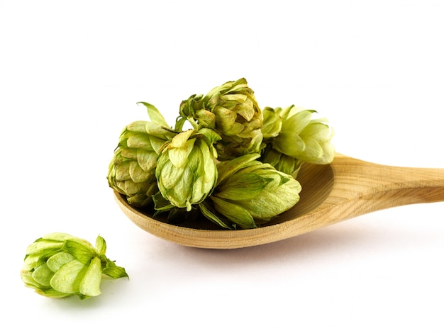 Dried hops lying in a wooden spoon