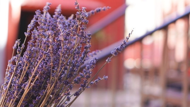 Dried lavender bunches on bright blurred background