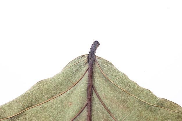 Dried leaf background.