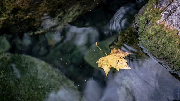 Dried leaf on water