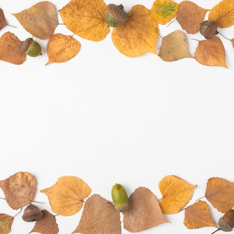 Dried leaves and acorns
