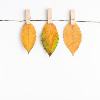 ロープに吊された乾いた葉
