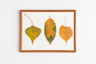 Dried leaves in frame