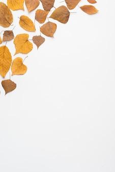 Dried leaves lying in corner