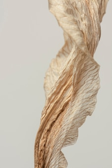 Dried lily flower on a gray background macro shot