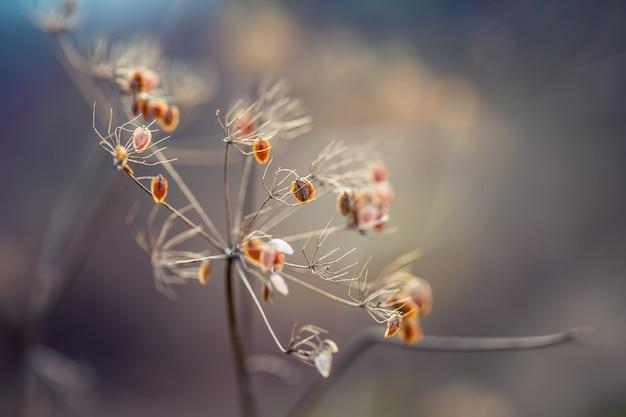 Высушенные растения кервель лес в осенних цветах огней и макросъемках закатный луг фон