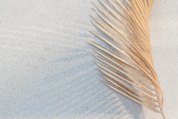 흰색 콘크리트 벽 배경에 말린 야자수 잎