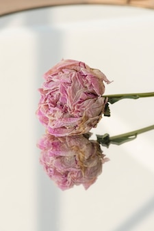 Dried pink peony flower on a round mirror