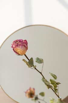 Dried pink rose reflection on a round mirror