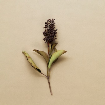 Dried plant stem on beige background