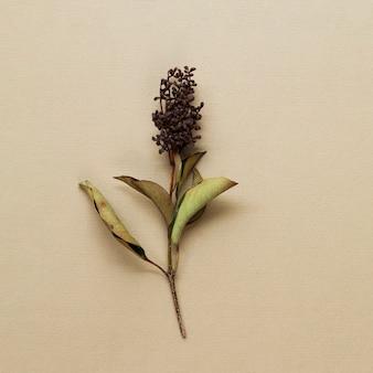 베이지 색 배경에 말린 된 식물 줄기