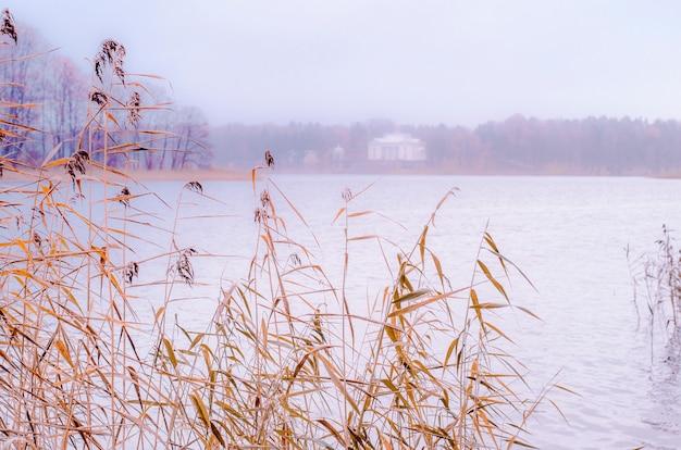 Dried plants on lake shore