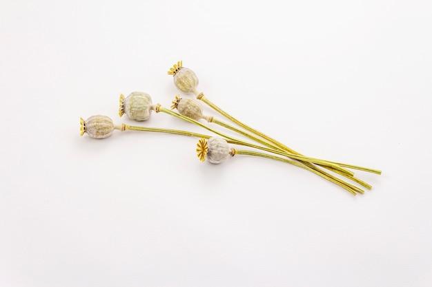 말린 양 귀 비 머리 무리에 고립 된 흰색 배경