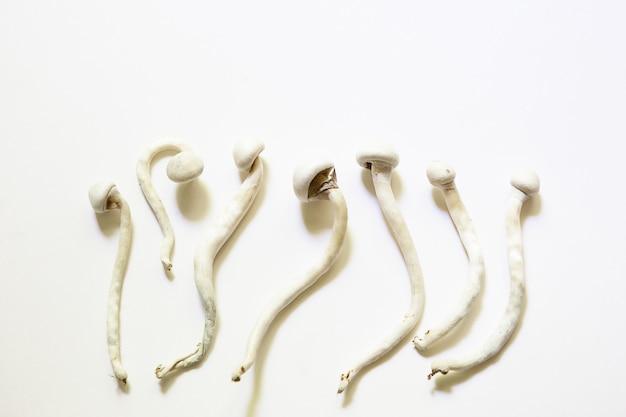 흰색 배경에 말린 실로시빈 버섯, 다양한 실로시베 큐벤시스 라스타 흰색. 재배, 조건 생성. microdosing, 환각 여행, 레크리에이션 및 의식 변화