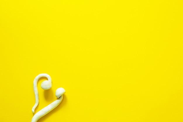 노란색 배경에 말린 실로시빈 버섯, 다양한 실로시베 쿠벤시스 라스타 흰색. 재배, 조건 생성. microdosing, 환각 여행, 레크리에이션 및 의식 변화