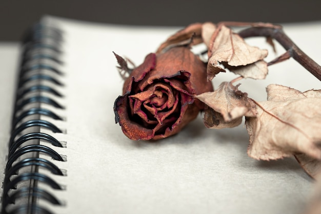 A dried red rose on notebook.keep for memorial with vintage style.