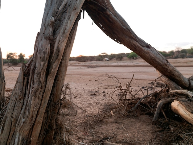 Dried riverbed in kenya africa