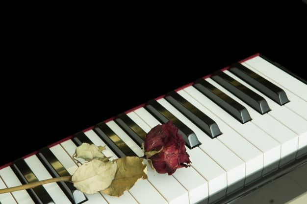 Dried rose on piano with black isolated.