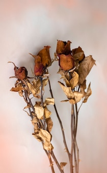 Dried roses with dark brown petal ,from aged ,put on background,blurry light around