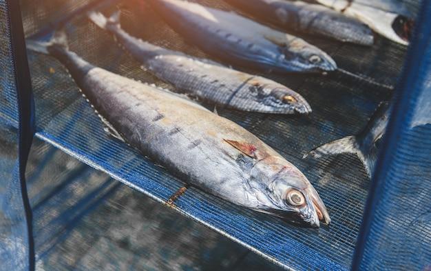 青い網の上で天日干しで塩漬けにした魚を乾かす