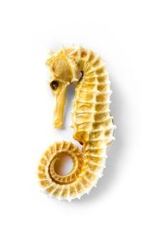 말린 된 해마 해골 흰색 배경에 고립