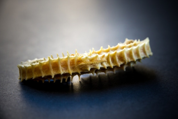 黒の背景に乾燥タツノオトシゴの骨格