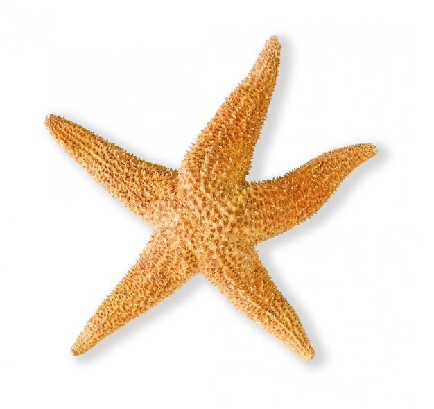Сушеные морские звезды изолированные