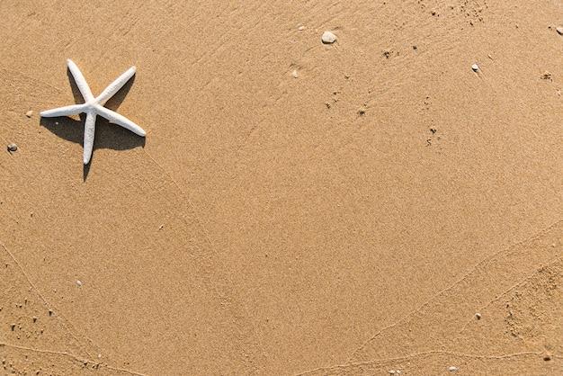 해변 배경에 말린 된 불가사리