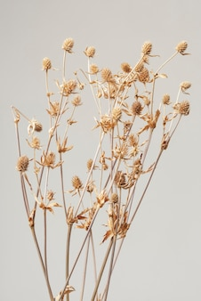 Dried thistle branch on a gray background