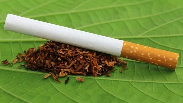 Сушеные листья табака с сигаретой на зеленом листе