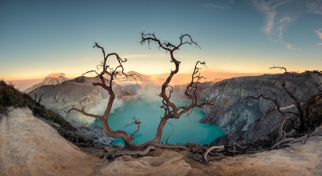 Dried tree on active volcano crater with turquoise lake at dawn