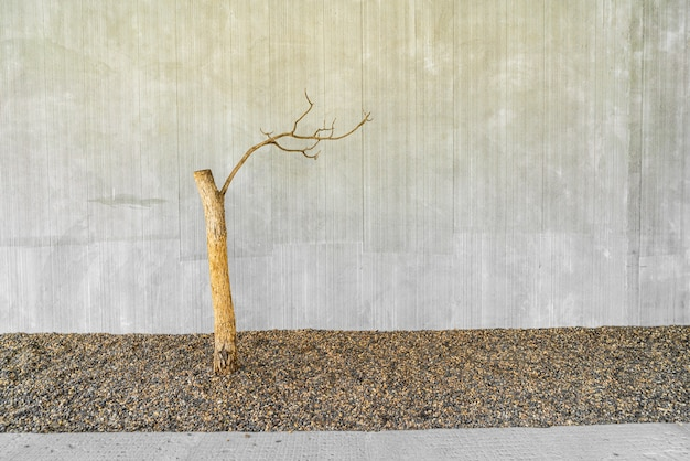 Dried tree decorate with concrete wall and copy space