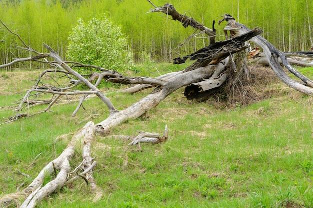 Высушенное дерево на зеленой траве