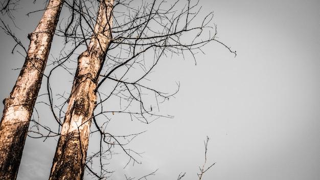 Высушенное дерево, вид вверх
