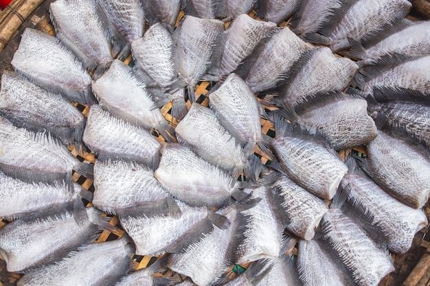 Dried trichogaster pectoralis fish arranged in rows thailand market