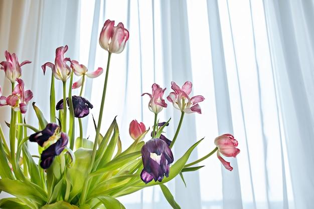 明るい日光の下で乾燥チューリップの花のクローズアップ。白ピンクのチューリップの花びらの花びら。花瓶の春の花をしおれます。枯れの概念色あせ花の美しさ