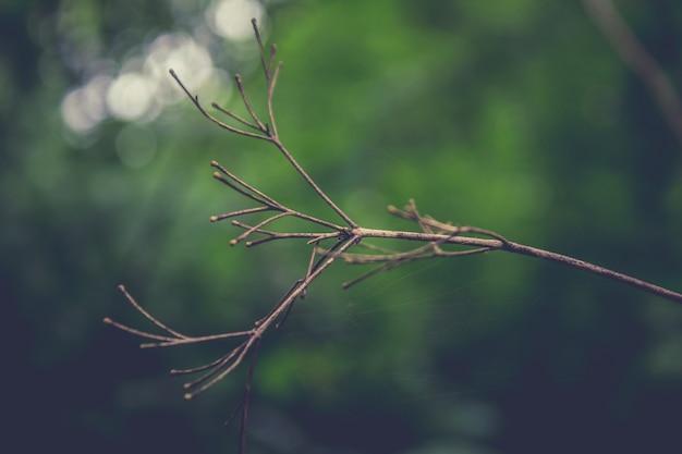バックグラウンドでの緑の枝付き乾燥枝