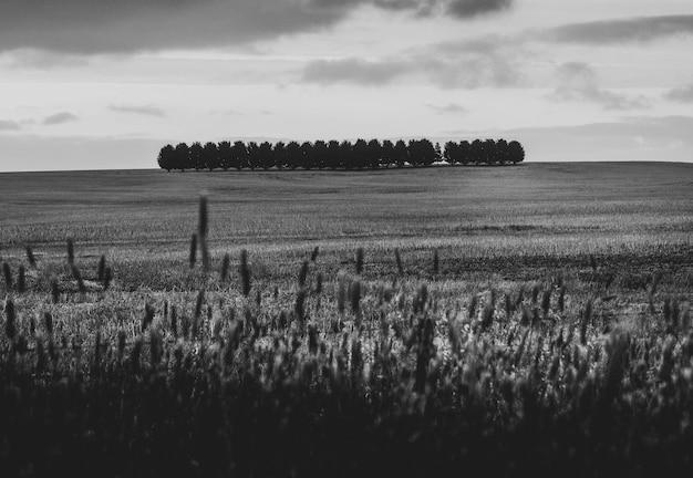 白と黒の乾いた麦畑