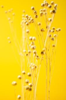 노란색 배경에 고립 된 말린 야생 노란색 꽃
