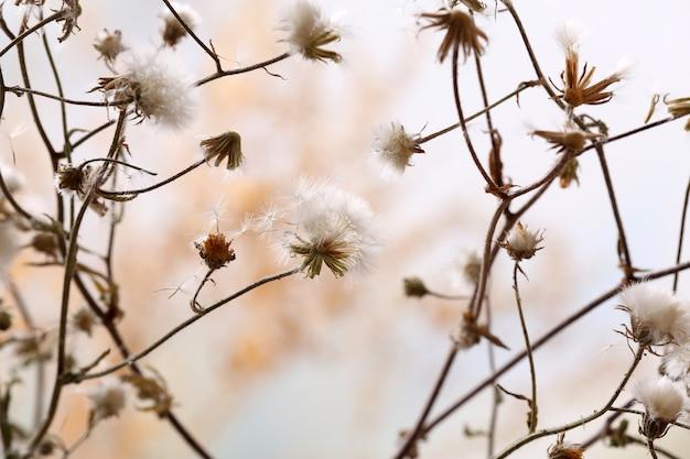 明るい背景で乾燥した野花