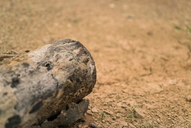 Высушенная древесина в засушливых землях