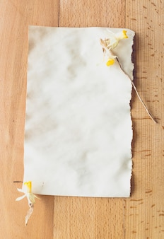 Dried yellow flowers lying on old blank piece of paper. place for text