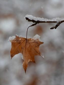 Foglia gialla secca sul ramo di un albero coperto di neve