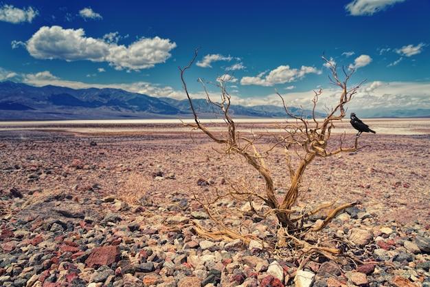 砂漠の流木