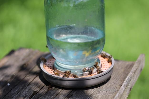 Поилка для пчел крупным планом