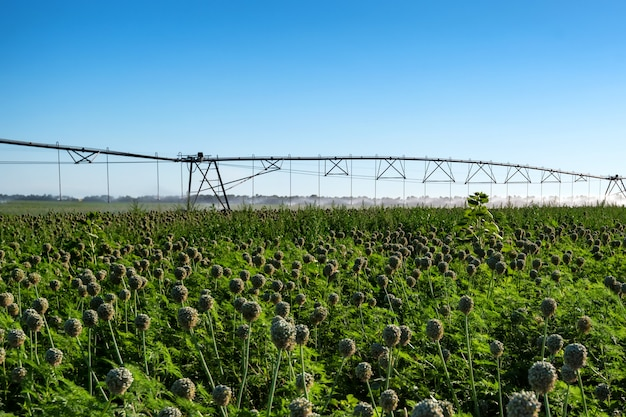 Система капельного орошения в полевых условиях