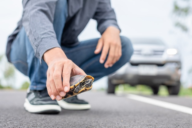 ドライバーは車を止め、道路でカメを助けます