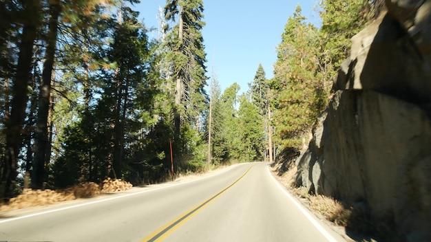 세쿼이아 숲에서 자동차를 운전하고 차에서 바라보는 전망. 킹스 캐년 근처의 큰 레드우드 침엽수와 도로. 미국 북부 캘리포니아 국립공원의 로드 트립. 히치하이킹 여행.